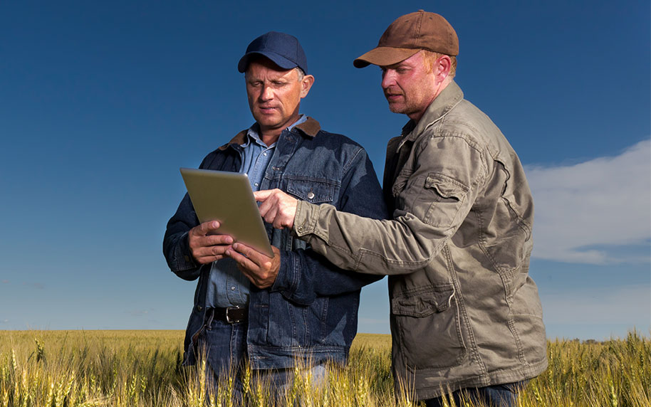 Farmers Using Tablet in Field